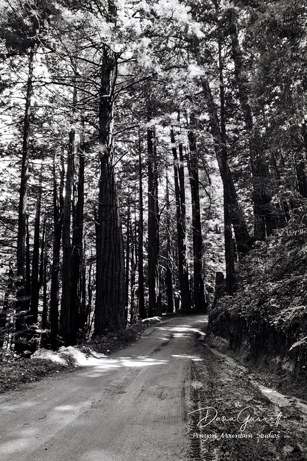 big sur, old coast road, dirt road, off-road, off road, redwoods, california, dana garrett, pinyon mountain studios