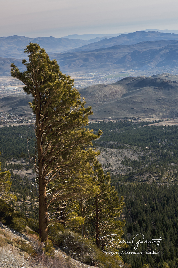 nevada, wind, slide mountian, sierras, reno, mountains, dana garrett, pinyon mountain studios