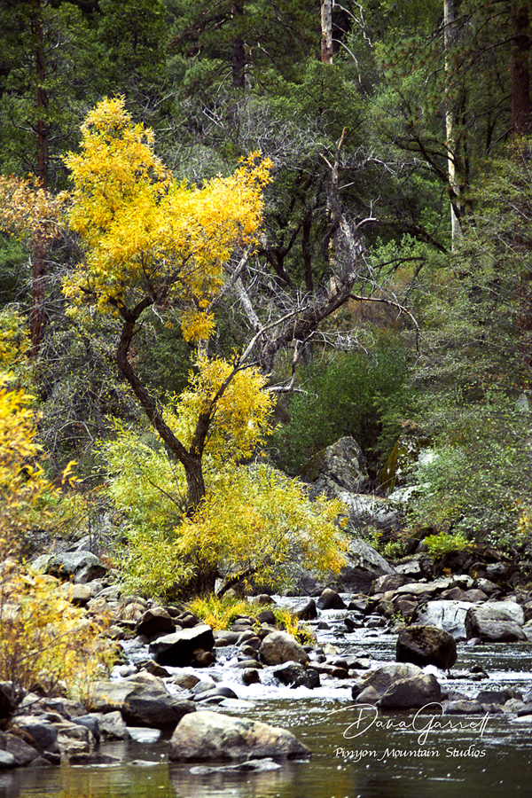 fall, color, merced, river, merced river, yosemite, california, dana garrett, pinyon mountain studios, pinyon mtn studios